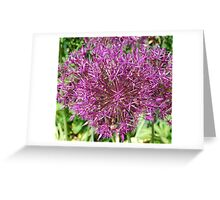 Fire Cracker Flowers Greeting Card