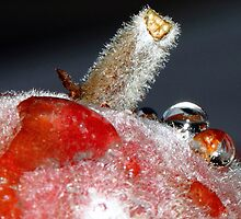 The macro of a fig. by debjyotinayak