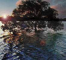 sunset mangrove by Mark Malinowski