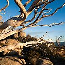 The Horn, Mt Buffalo, Victoria by Bruce Langdon