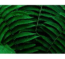 Fern Triad Photographic Print