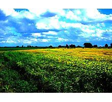 Drama Barley Photographic Print