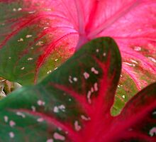 Coleus Series - Two  ^ by ctheworld