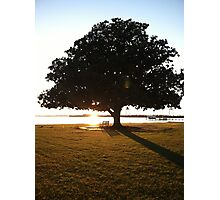 Magnolia in sunset Photographic Print