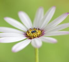 Summer brights by Mandy Disher