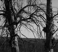 Desolate winter by vanitastic