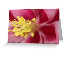 Pink and Purple Columbine Flower  Greeting Card