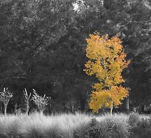 Tree at Sholom Park by ValeriesGallery
