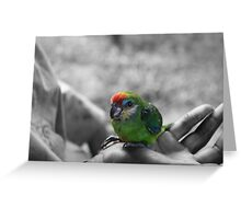 A Colorful Pet Greeting Card