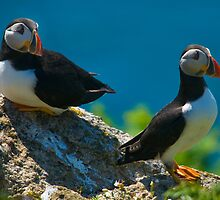 Puffin Couple by Mark Robson