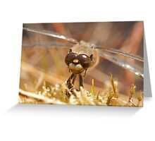 Did I forget to shave again? (Four spotted chaser) Greeting Card