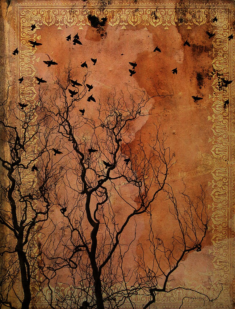 The Book of Birds by Feng Chen