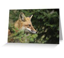 Backyard Fox Greeting Card