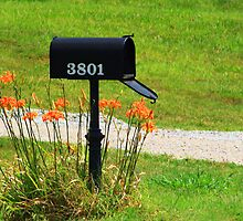 Got Mail by Susan Blevins