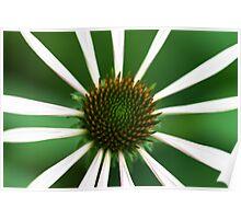 Green Echinacea Poster