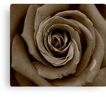 Red Rose??? Canvas Print