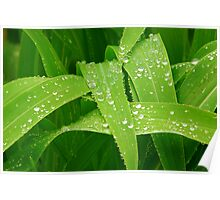 Green Nature with Rain Drops Poster