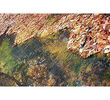 Monet's Mirror Photographic Print