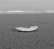 Sand dollar by Hannah Fenton-Williams