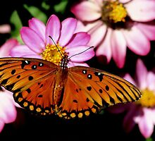 Viceroy Butterfly and Purple Flowers by Paulette1021