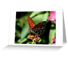 Butterfly with Attitude Greeting Card