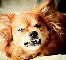 Grrrr! by Sangeeta
