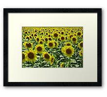 Field Full of Sunshine Framed Print