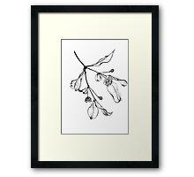 Blossoms (Austromyrtus) Framed Print