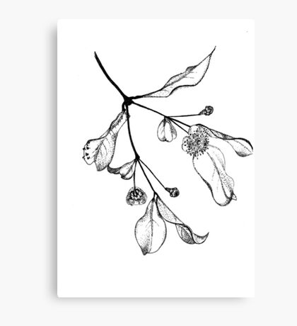 Blossoms (Austromyrtus) Canvas Print