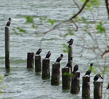 York River Cormorants by Jennie L. Richards