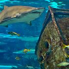 Guarding the Shipwreck - Shark at Ripley's Aquarium by Brett Wicker