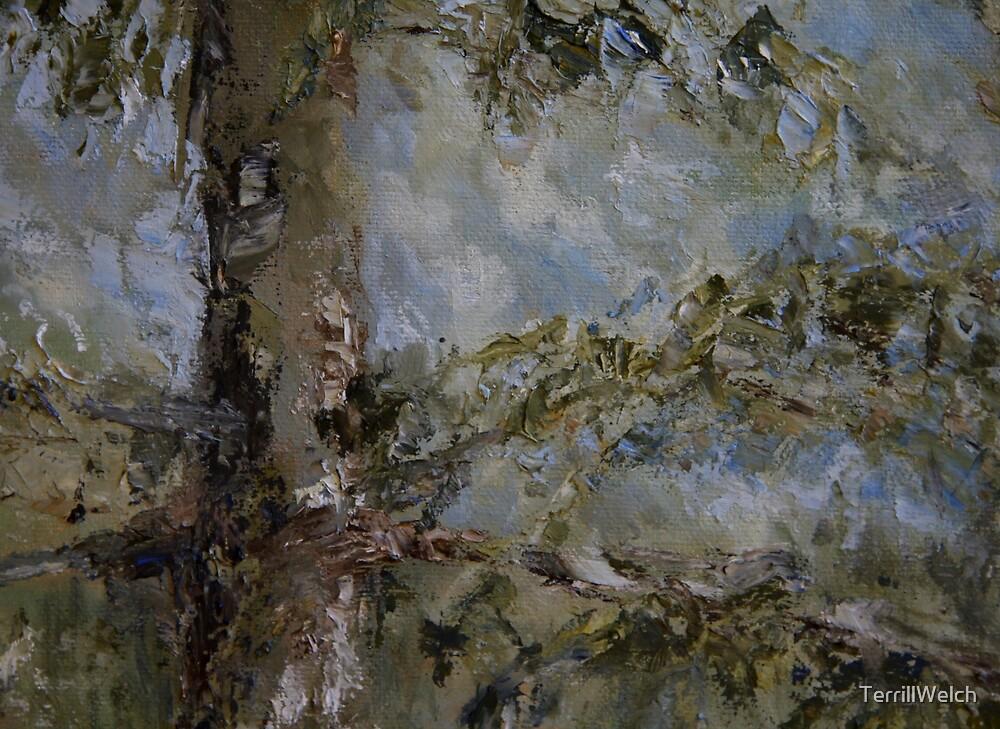 fir tree  by TerrillWelch