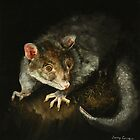 Brushtail possum (Trichosurus vulpecula) by TallabeenaArt