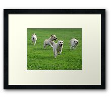 Multi Lab Framed Print
