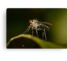 Dolichopodid Fly Canvas Print