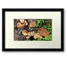 """"""" Deep in the undergrowth"""" Framed Print"""