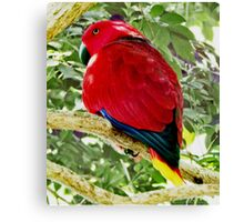 Chatty Red Canvas Print
