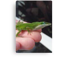 Green Anole lizard Canvas Print