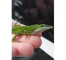 Green Anole lizard Photographic Print
