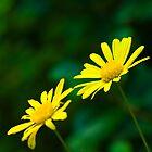 Blooming by Simon  Thomas