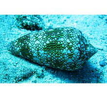 Beautiful but deadly cone shell Photographic Print