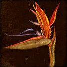 Botanica - Bird of Paradise by Sybille Sterk