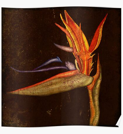 Botanica - Bird of Paradise Poster
