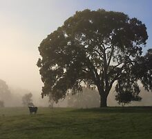 cow and gum tree in the fog by Barb Leopold