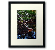 nudgee wood Framed Print