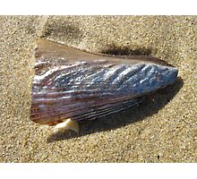 Silver Shell on Beach Photographic Print