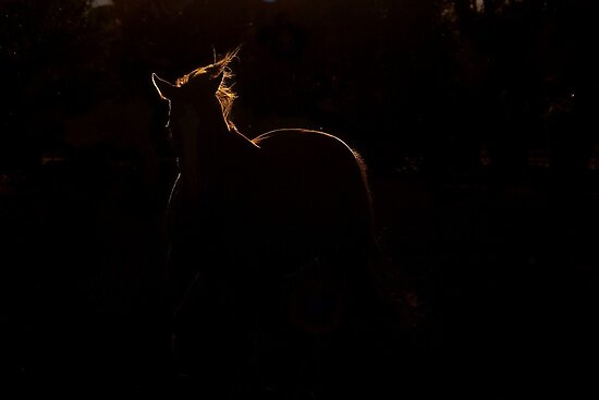 Prancing with light.. by Penny Kittel