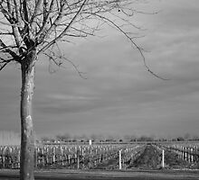 Wine in Winter by Michelle Dewis