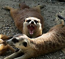 AaaaaaaH! by Željko Malagurski