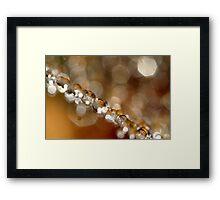 Web & Sparkles Framed Print